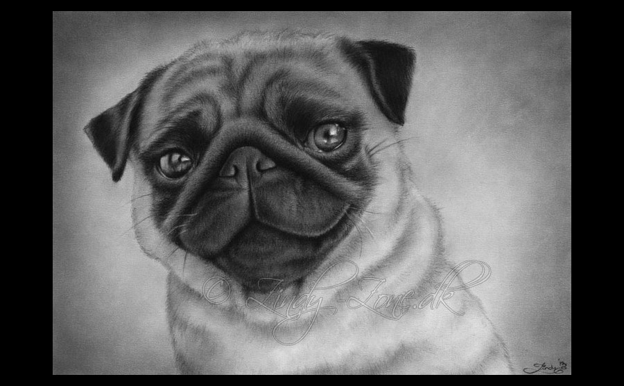 how to draw a realistic pug drawn pug realistic pencil and in color drawn pug realistic a pug draw realistic to how