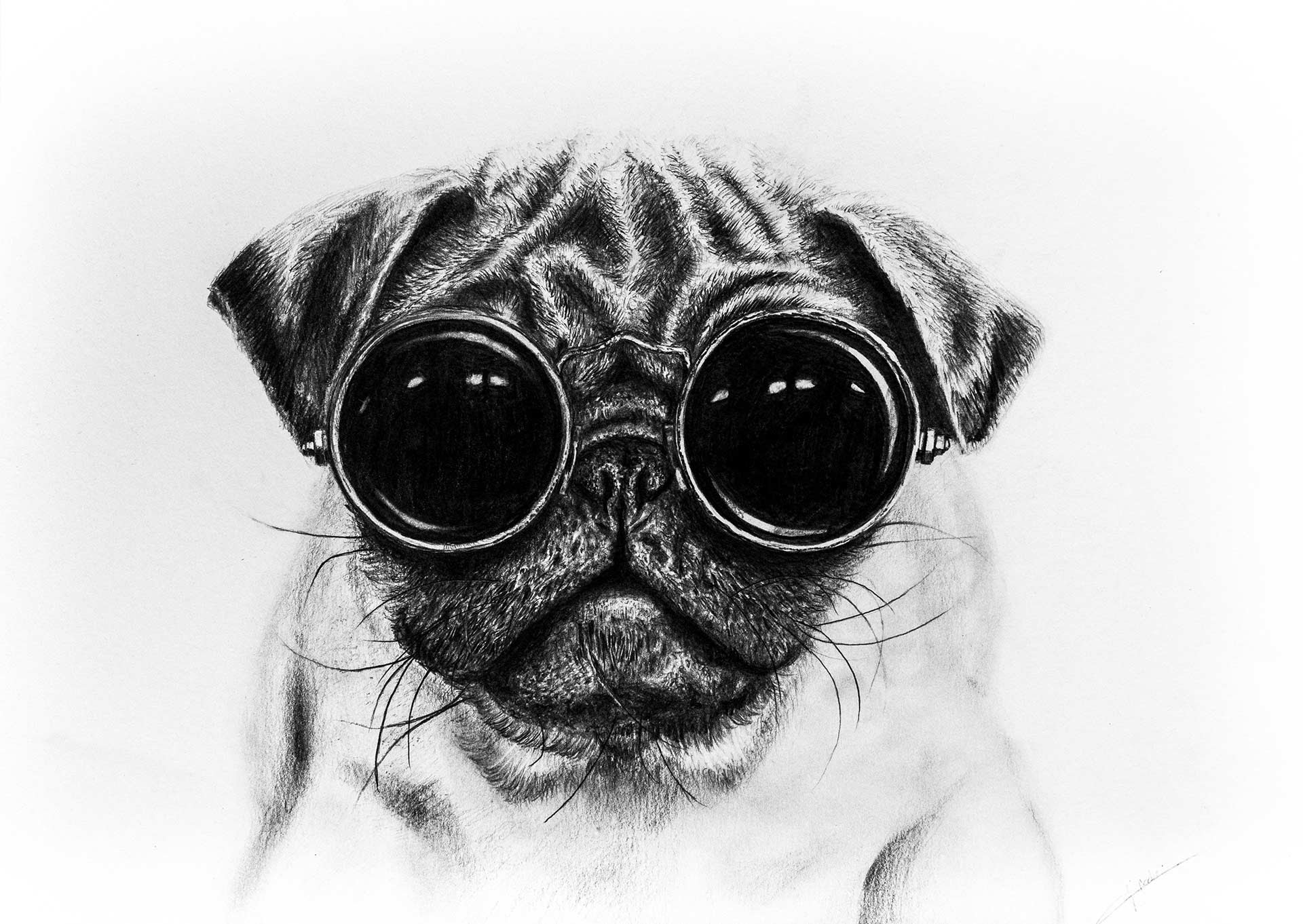 how to draw a realistic pug how to draw a realistic pug step by step pets animals a draw to realistic pug how