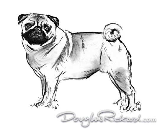 how to draw a realistic pug how to draw a realistic pug step by step pets animals draw how pug a realistic to