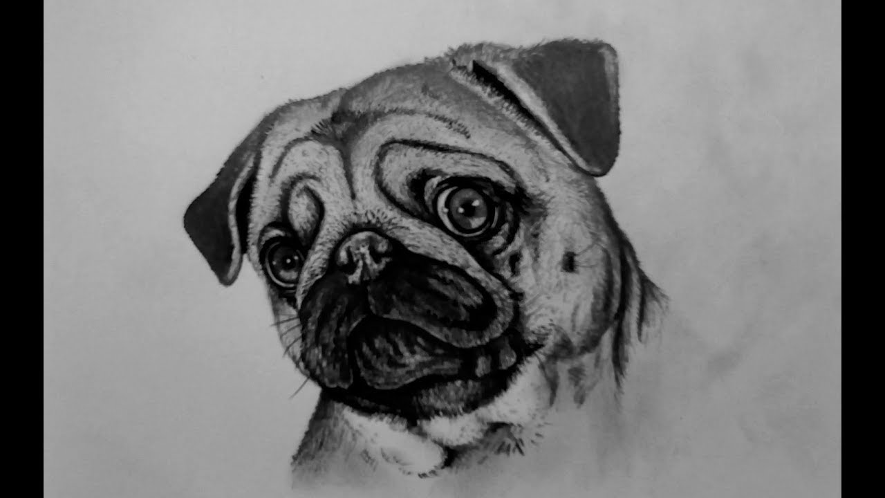 how to draw a realistic pug pug drawing by thegmodgirl on deviantart how a draw to realistic pug