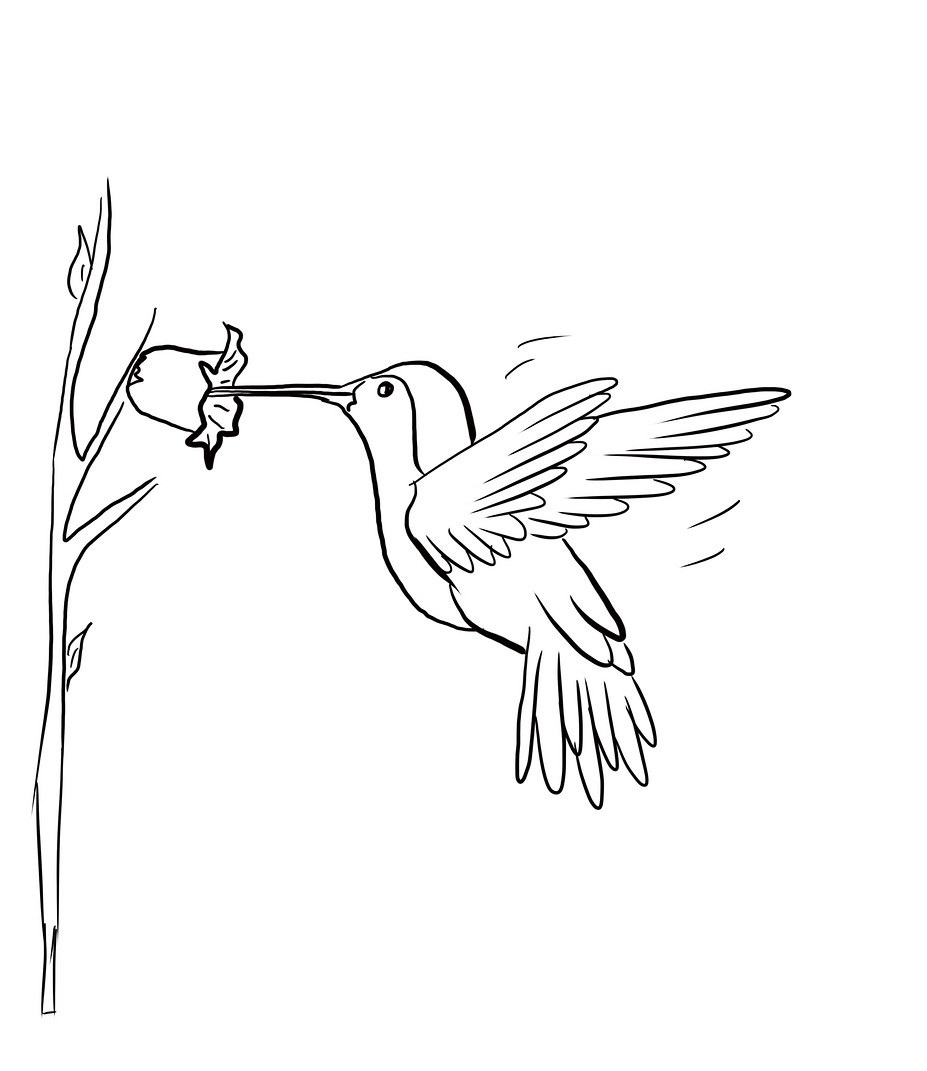 hummingbirds coloring pages free printable hummingbird coloring pages for kids hummingbirds pages coloring 1 1