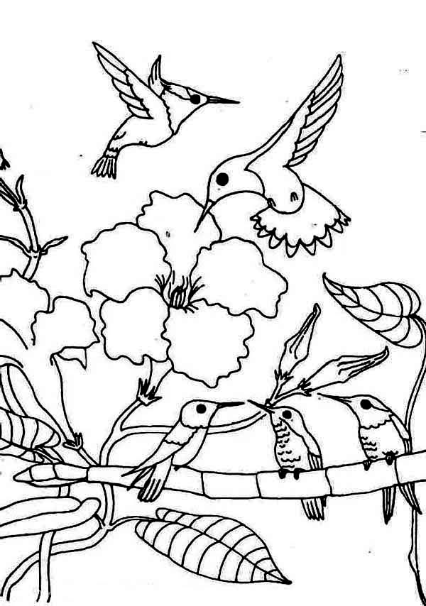 hummingbirds coloring pages hummingbird coloring pages getcoloringpagescom coloring hummingbirds pages
