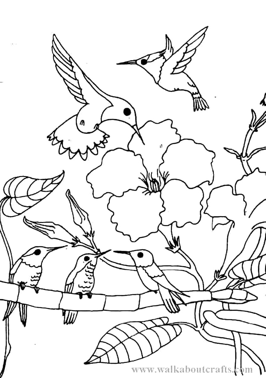 hummingbirds coloring pages hummingbird coloring pages to download and print for free hummingbirds coloring pages