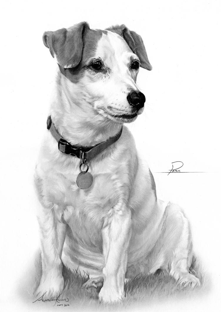 jack russell drawings commission jack russell terrier by captured in pencil on drawings jack russell