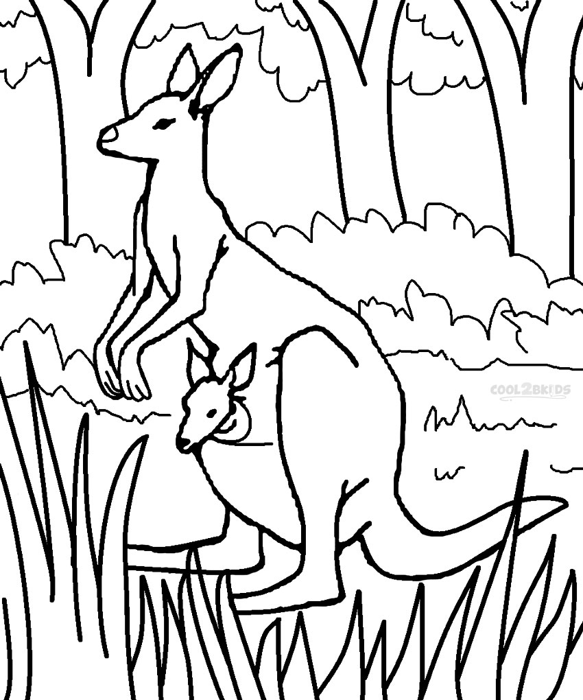 kangaroo colour in kangaroo drawing at getdrawings free download colour kangaroo in
