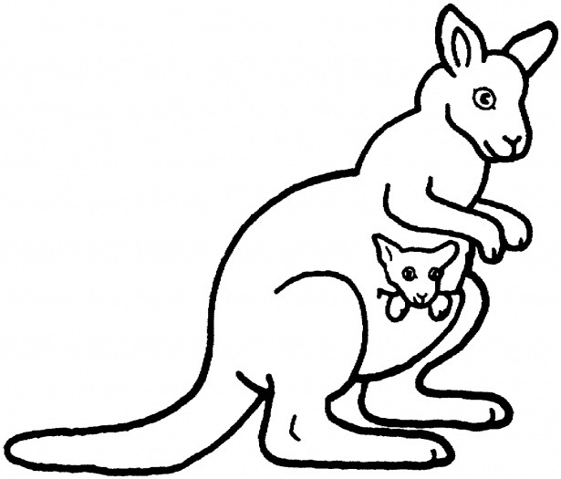 kangaroo colour in kangaroos to color for children  kangaroos kids coloring kangaroo in colour