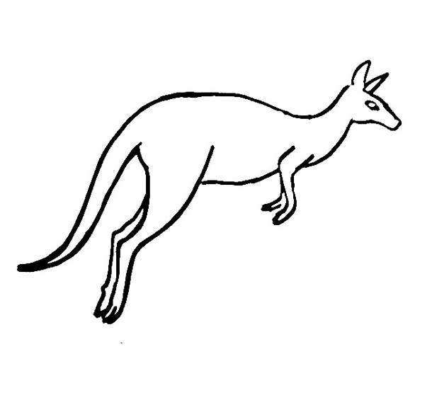 kangaroo colour in line drawing of a kangaroo at getdrawings free download kangaroo in colour