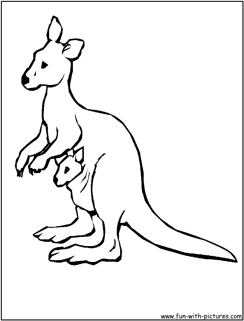 kangaroo colour in top 10 free printable kangaroo coloring pages online in colour kangaroo