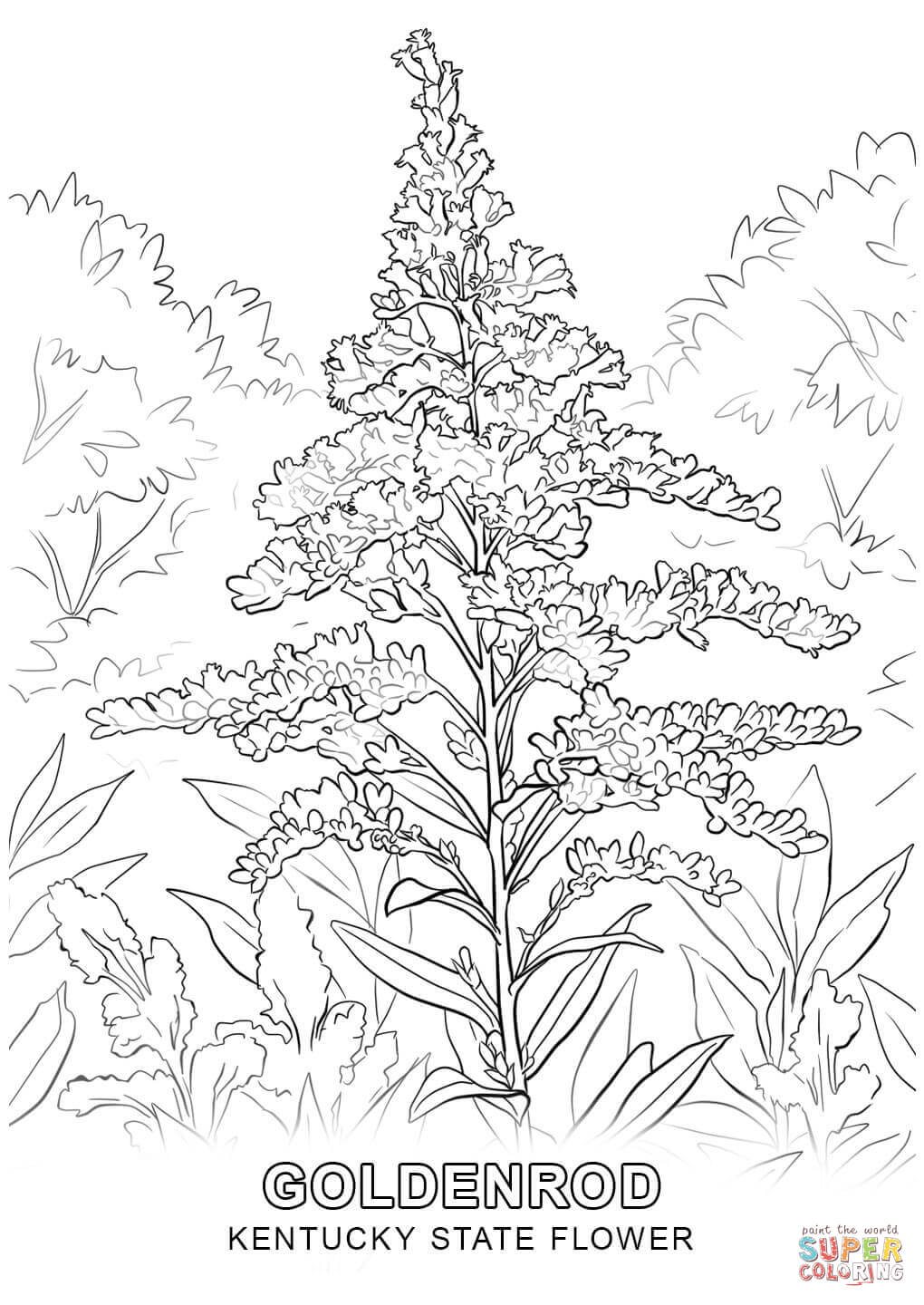 kentucky state flower coloring page kentucky state flower coloring page woo jr kids activities kentucky coloring flower state page