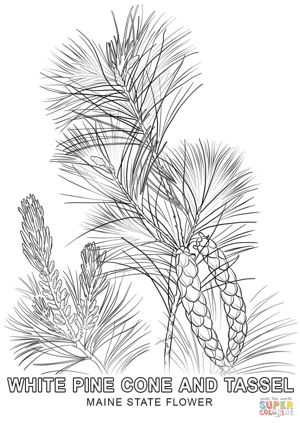 maine state flower state flower maine white pine cone svg cut file by flower state maine