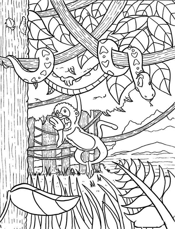 rainforest animal coloring pages coloring pages wild animals three little cute baby fox pages coloring animal rainforest