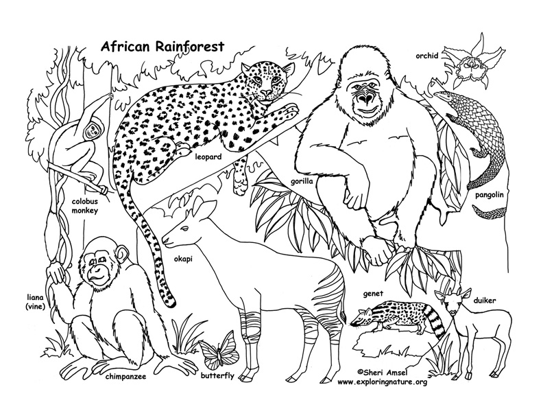 rainforest animal coloring pages free printable rainforest coloring pages coloring home rainforest coloring animal pages 1 1