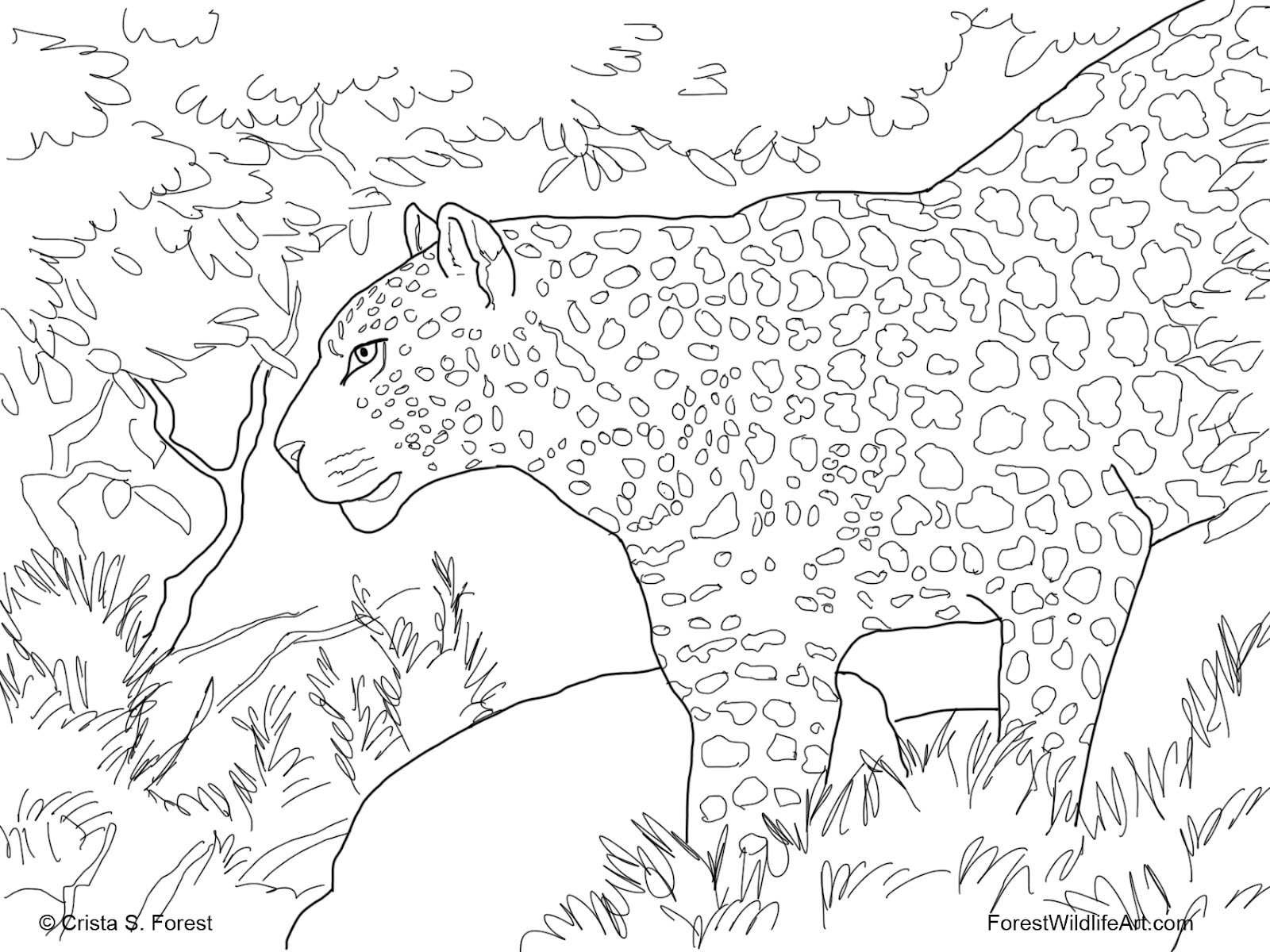 rainforest animal coloring pages puppy dog in the forest coloring page free printable coloring pages rainforest animal