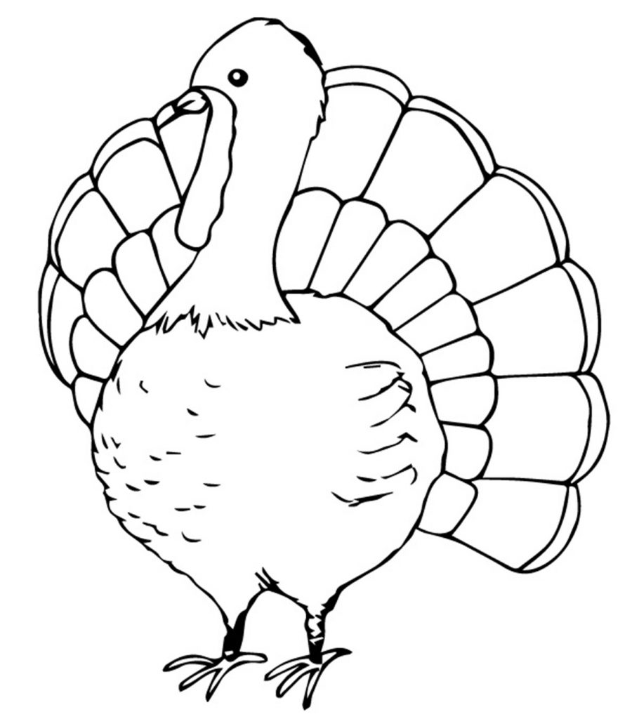 turkey coloring turkey coloring page free large images coloring turkey