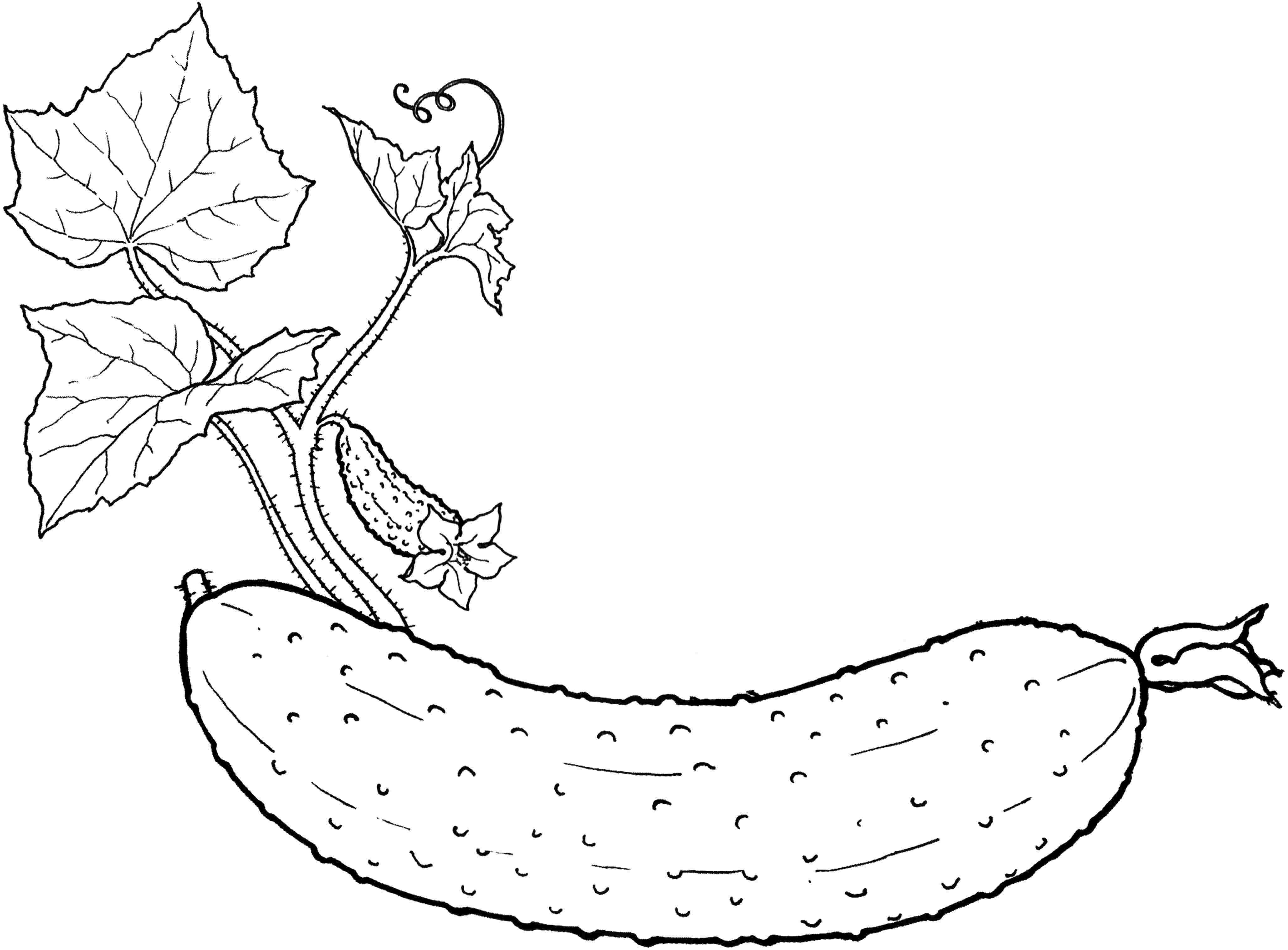 vegetable images for coloring vegetable coloring pages free download on clipartmag images for vegetable coloring