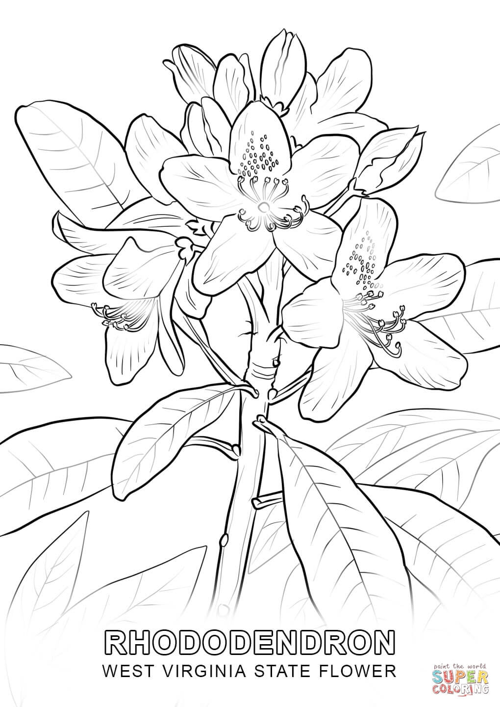 virginia state coloring page west virginia state tree coloring page free printable coloring page virginia state