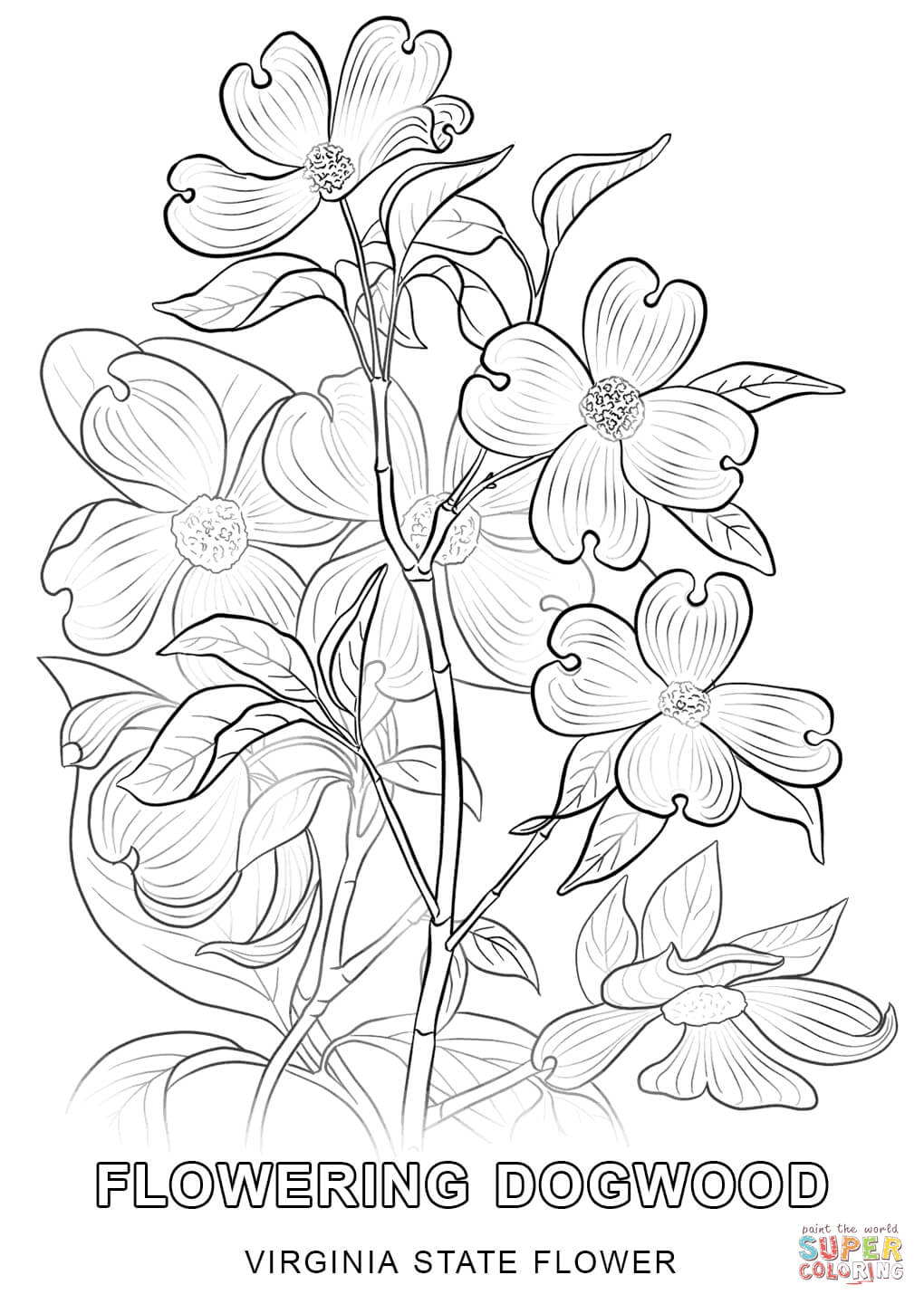 virginia state flower virginia state flower coloring page woo jr kids activities flower virginia state