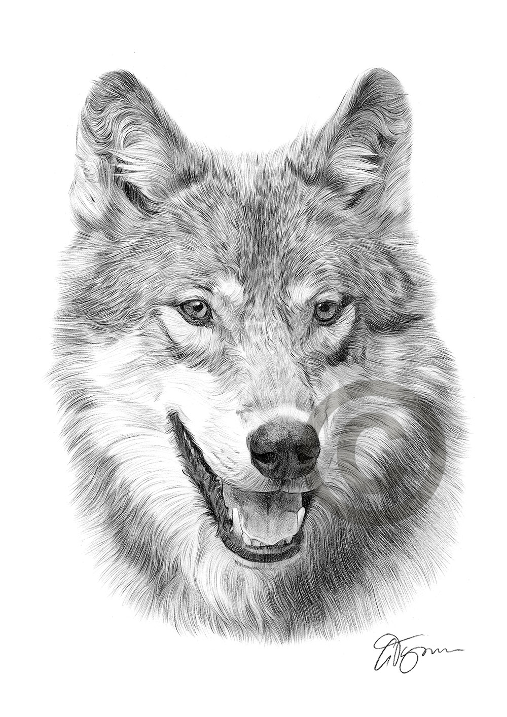 wolf drawing wolf pencil drawing artwork print a3 a4 sizes signed by drawing wolf