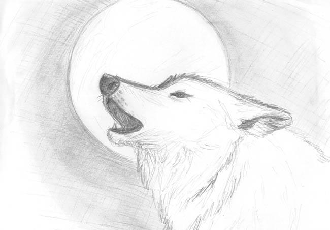 wolf howling at the moon drawing amazoncom wolf howling twilight moon vinyl wall decal drawing howling wolf the moon at