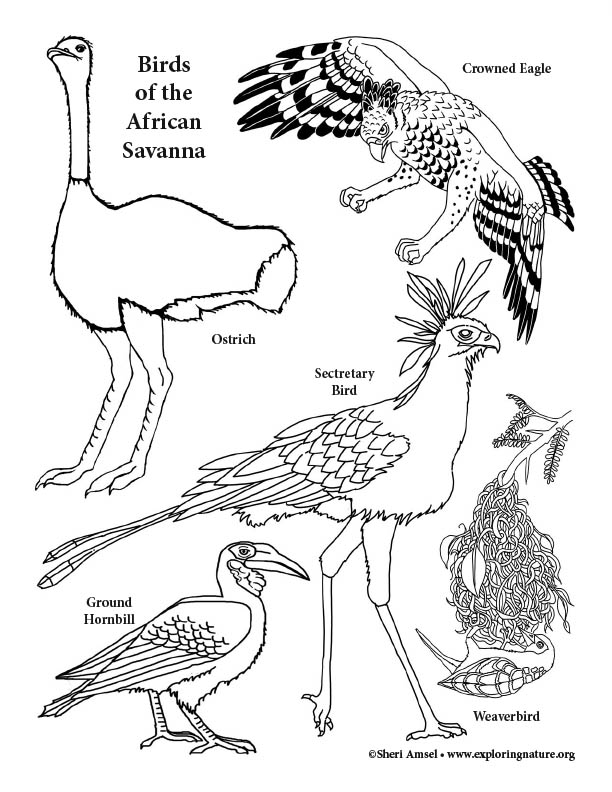 african savanna coloring pages african savanna coloring page at getdrawings free download pages african savanna coloring