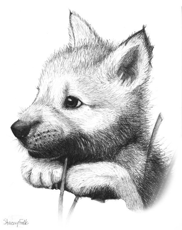 anime animals drawings how to draw anime dogs step by step anime animals anime drawings animals anime