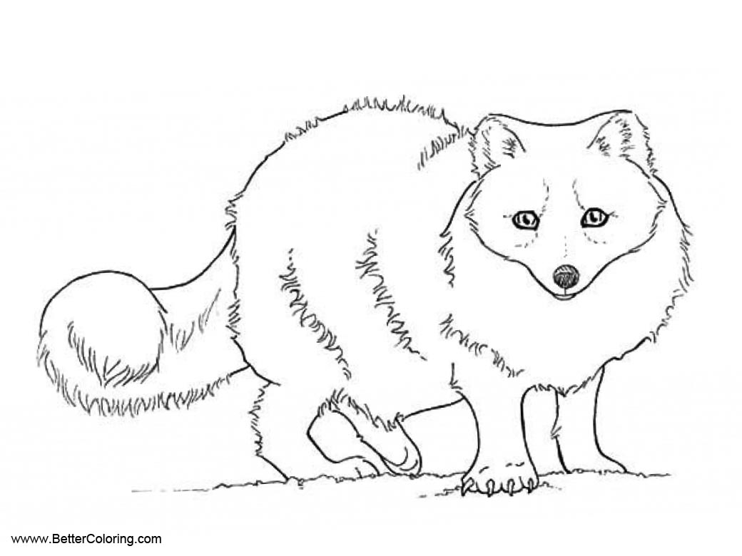 arctic fox coloring pages arctic fox coloring pages coloring pages to download and coloring fox pages arctic
