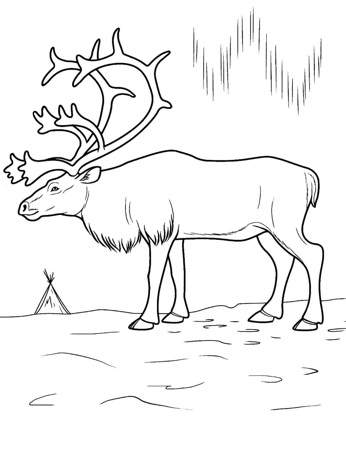 arctic fox coloring pages arctic fox coloring pages coloring pages to download and fox arctic coloring pages