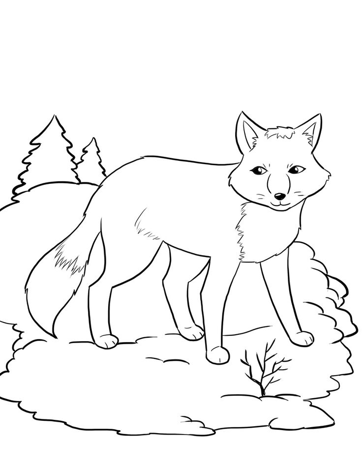 arctic fox coloring pages arctic hare drawing at getdrawings free download pages fox coloring arctic