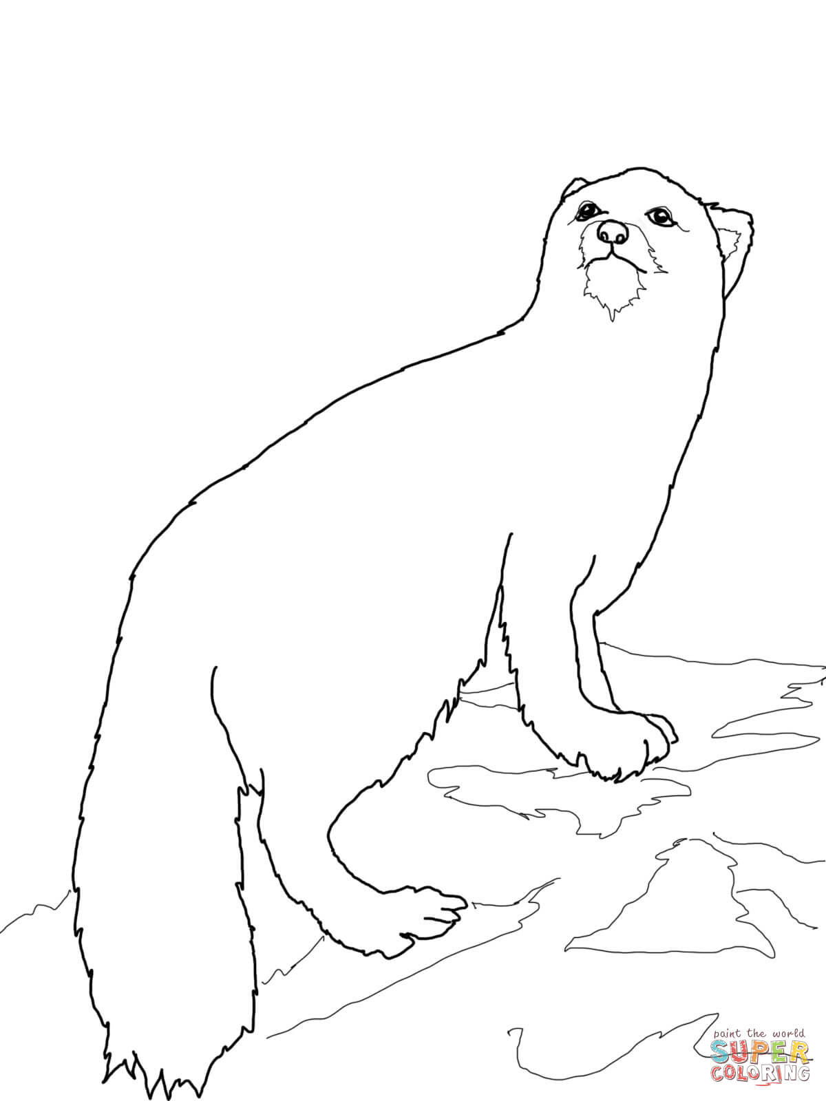 arctic fox coloring pages arctic tundra animals coloring pages arctic fox free arctic fox coloring pages
