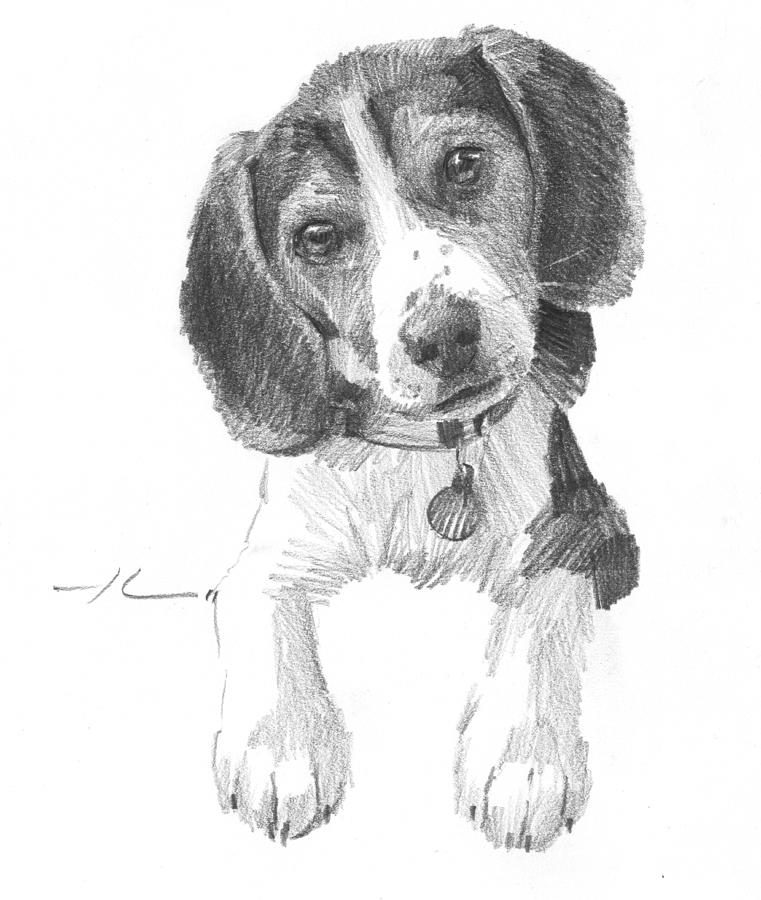 beagle drawing beagle pencil drawing print a4 only signed by artist gary drawing beagle