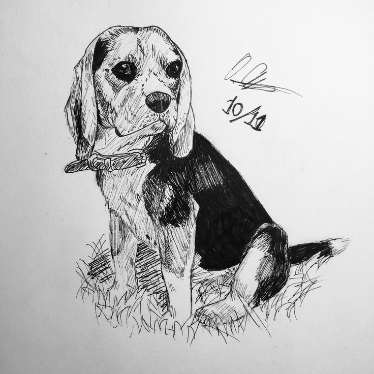 beagle drawing gentle beagle drawing by kate sumners drawing beagle