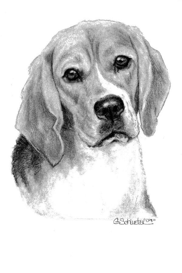 beagle drawing photo to portrait beautiful portrait of dogs in pencil beagle drawing