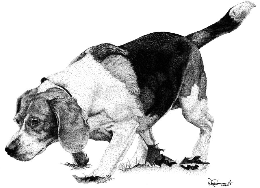 beagle drawing worldwide gallery page of signed artwork prints for hound drawing beagle