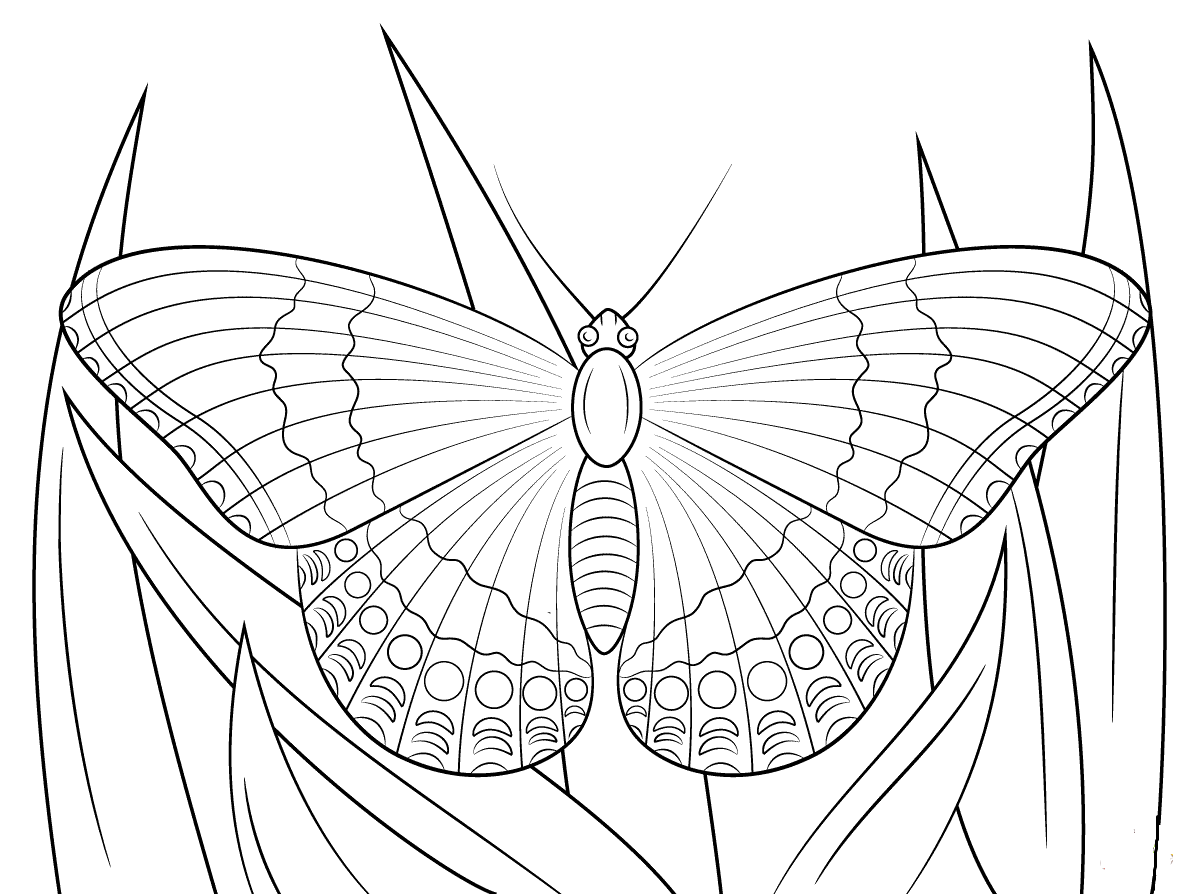 butterfly coloring book page butterflies 5 animals coloring pages coloring book page coloring butterfly book