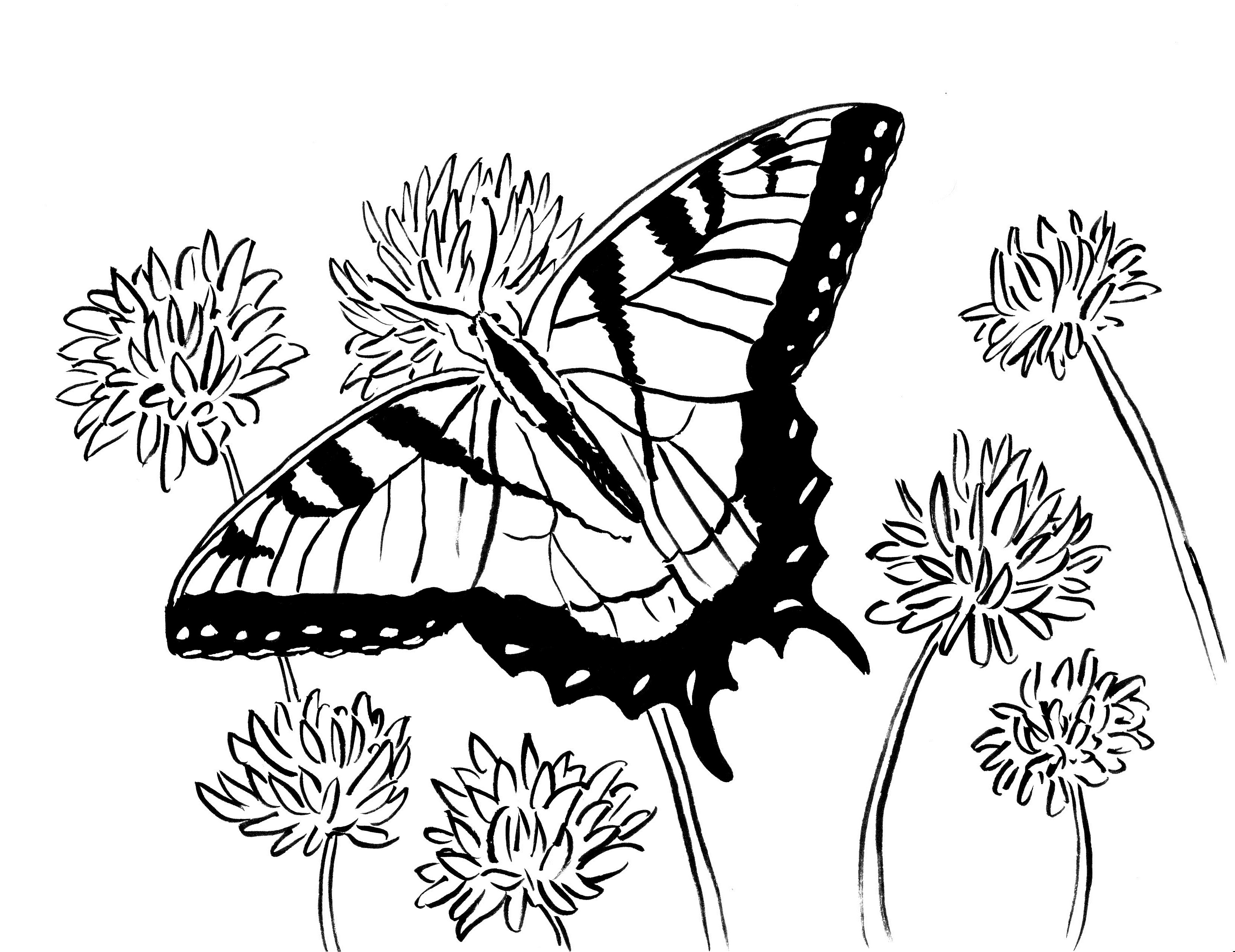 butterfly coloring book page free printable butterfly coloring page ausdruckbare book butterfly coloring page