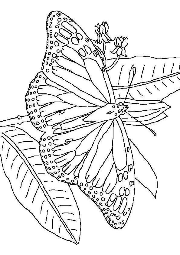 butterfly mosaic coloring page butterfly coloringpages stained glass patterns free page coloring butterfly mosaic