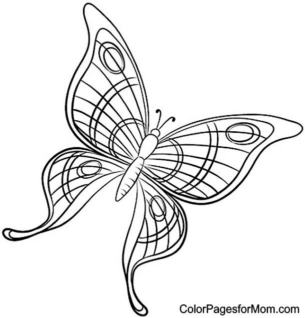 butterfly mosaic coloring page darryls stained glass patterns by zelma stain glass butterfly page coloring mosaic