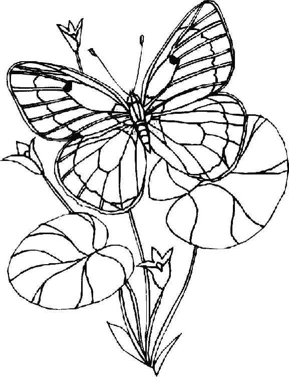 butterfly mosaic coloring page mosaic butterfly pages coloring pages coloring butterfly mosaic page
