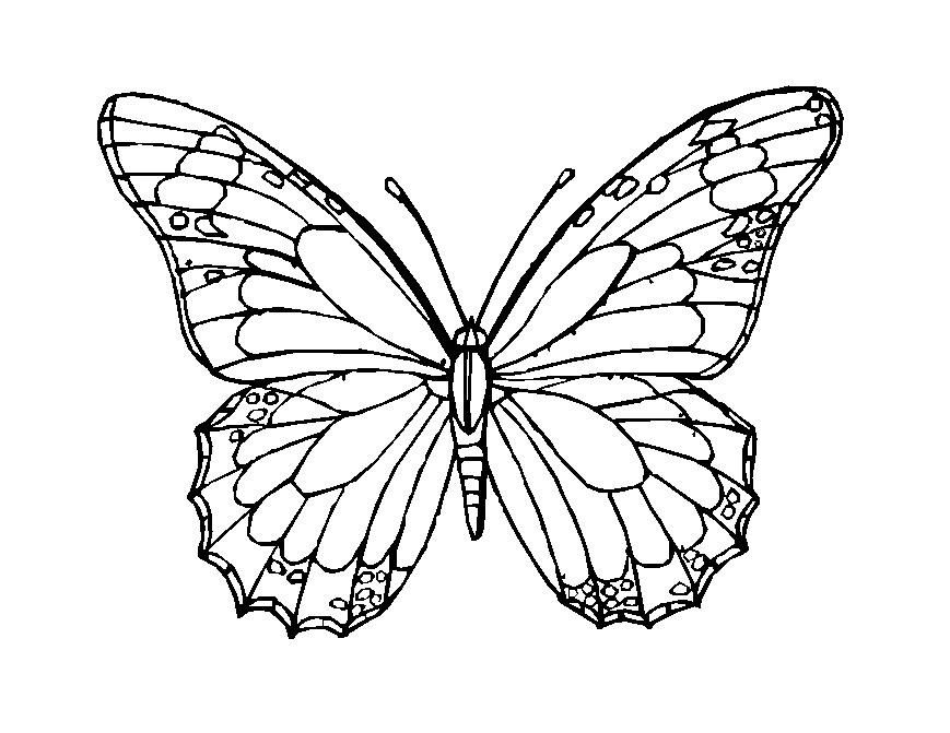 butterfly mosaic coloring page pin by lynn ringenberg on stained glass butterfly coloring butterfly mosaic page