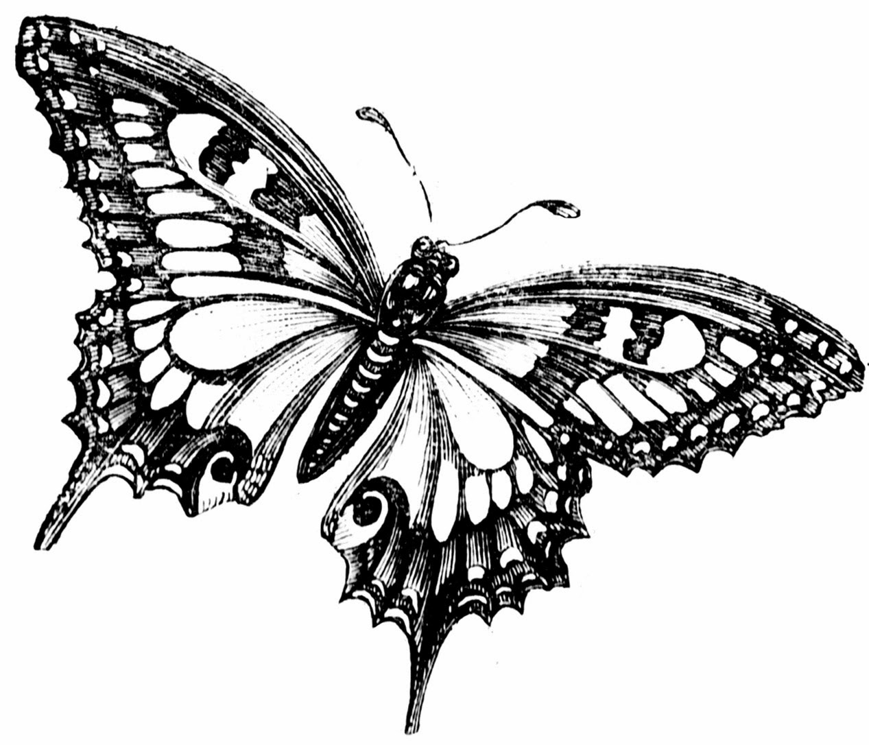 butterfly printable printable fun butterfly coloring pages for kids art hearty butterfly printable