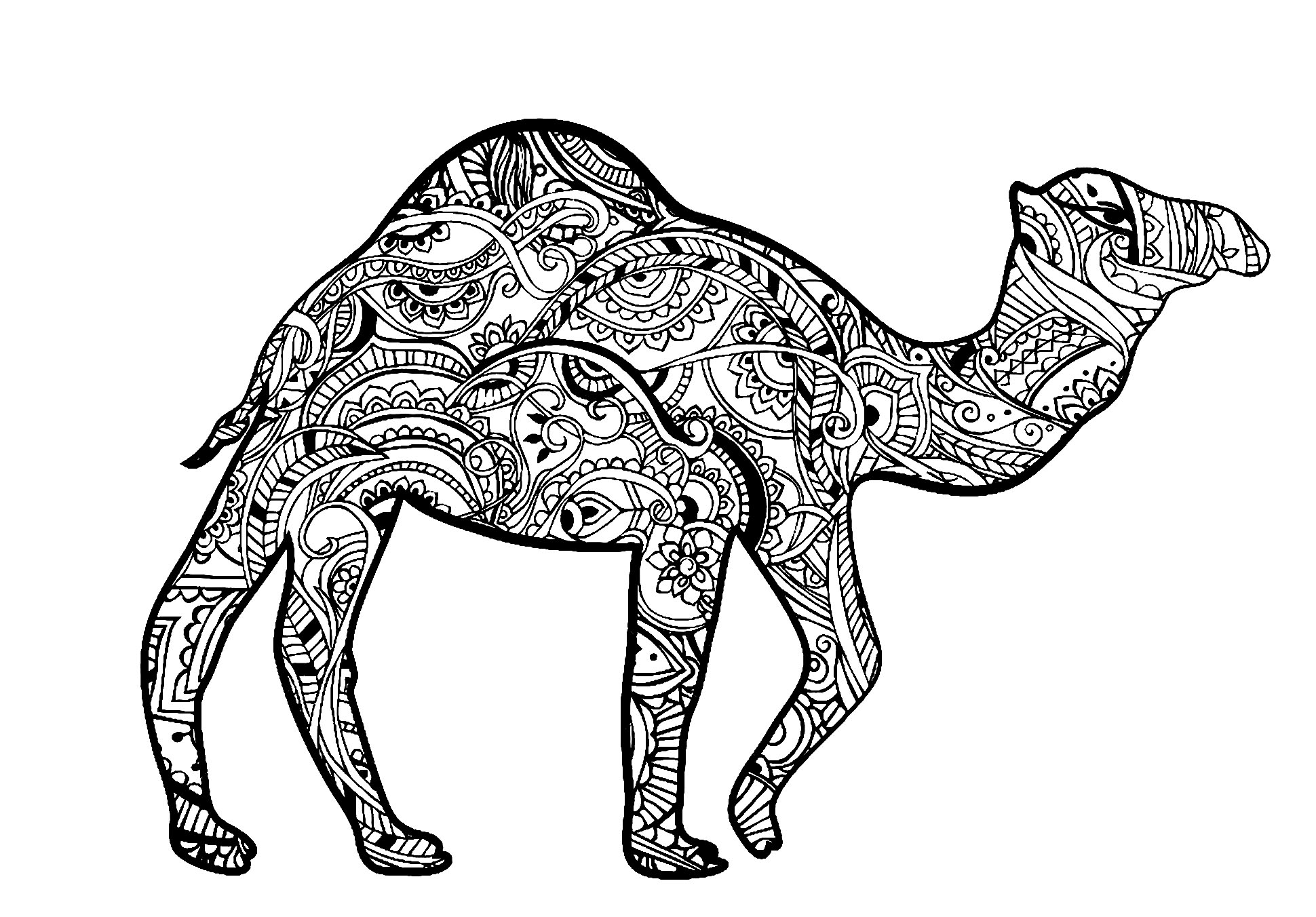 camels coloring pages camel coloring pages for students preschool and kindergarten coloring camels pages