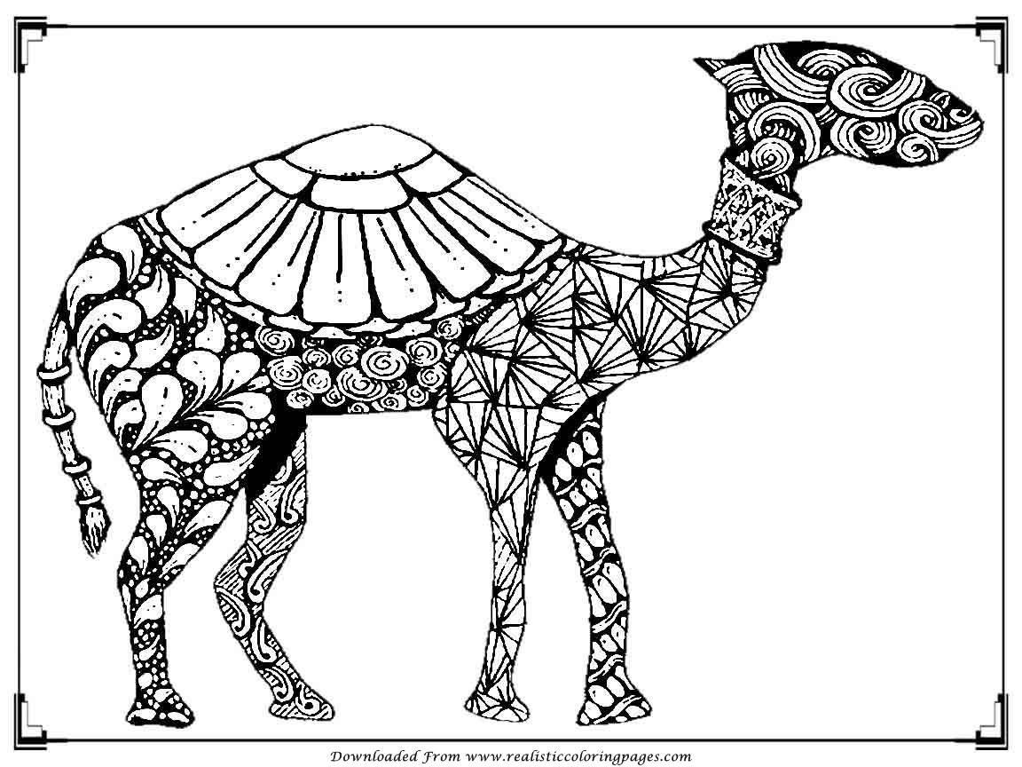 camels coloring pages free camel coloring pages camels coloring pages