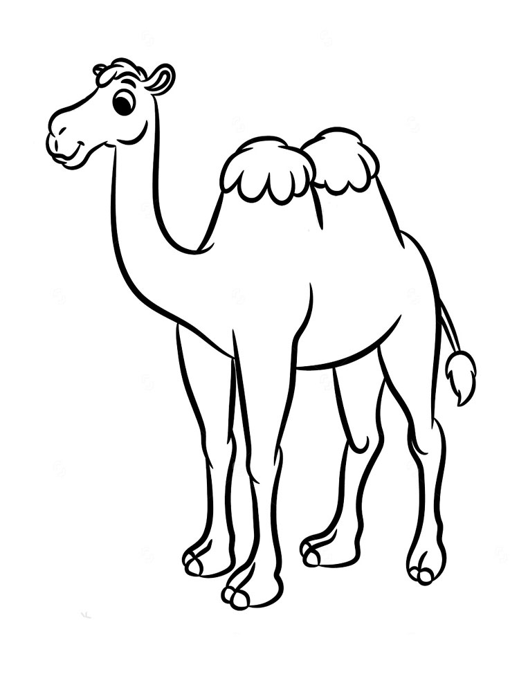 camels coloring pages free camel coloring pages camels pages coloring