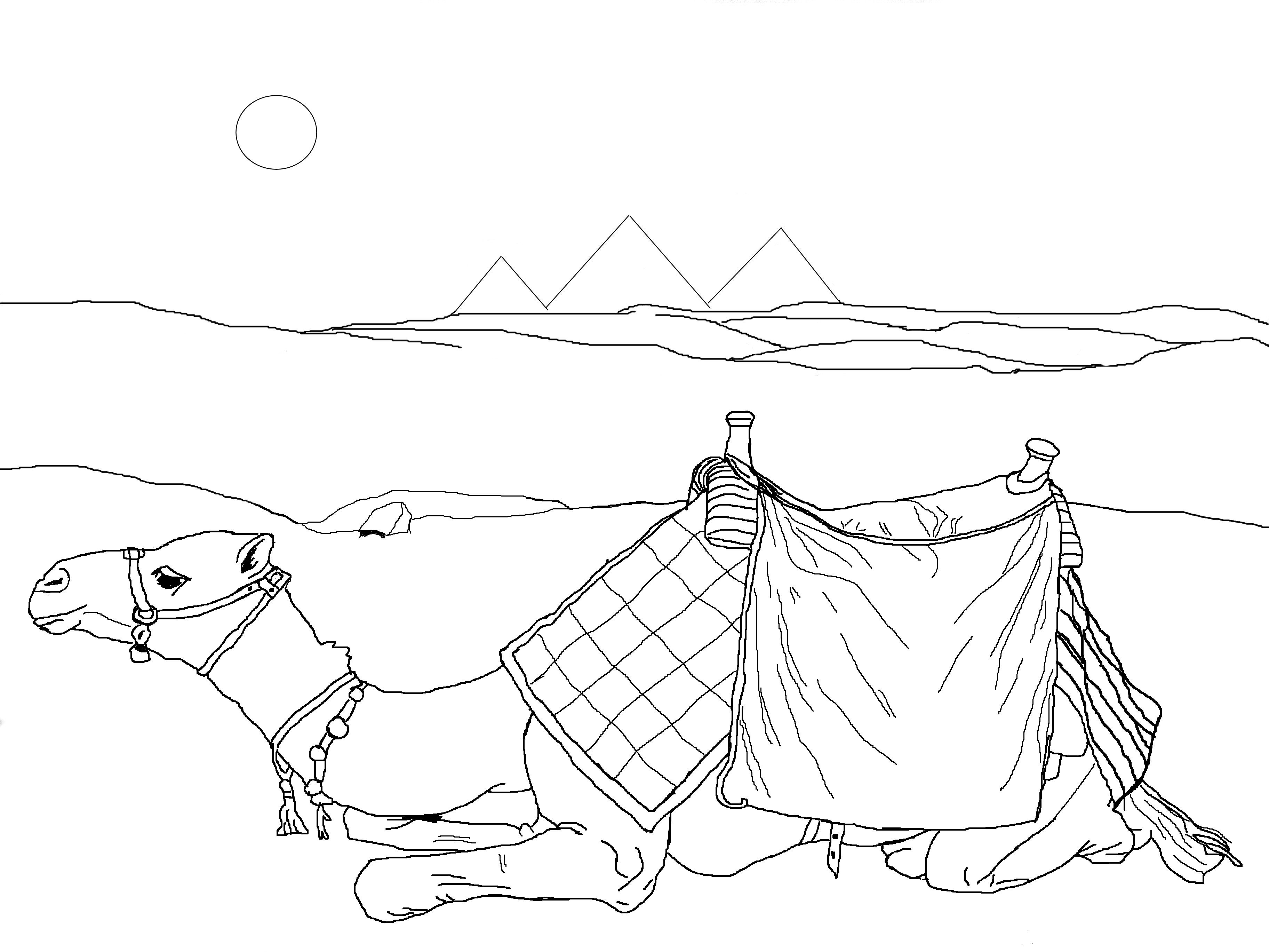 camels coloring pages free camel coloring pages coloring camels pages