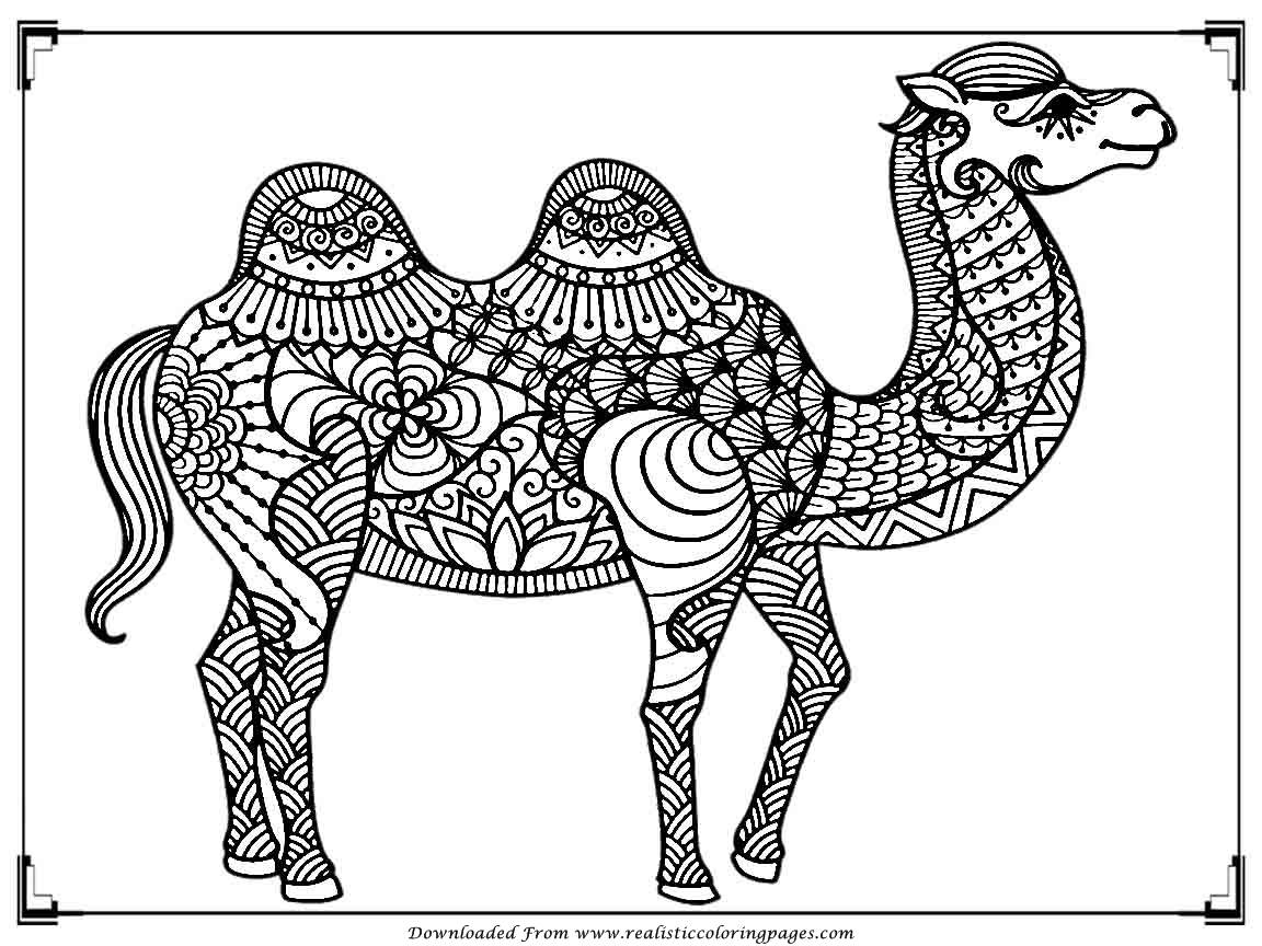 camels coloring pages free printable camel coloring pages for kids animal place camels pages coloring