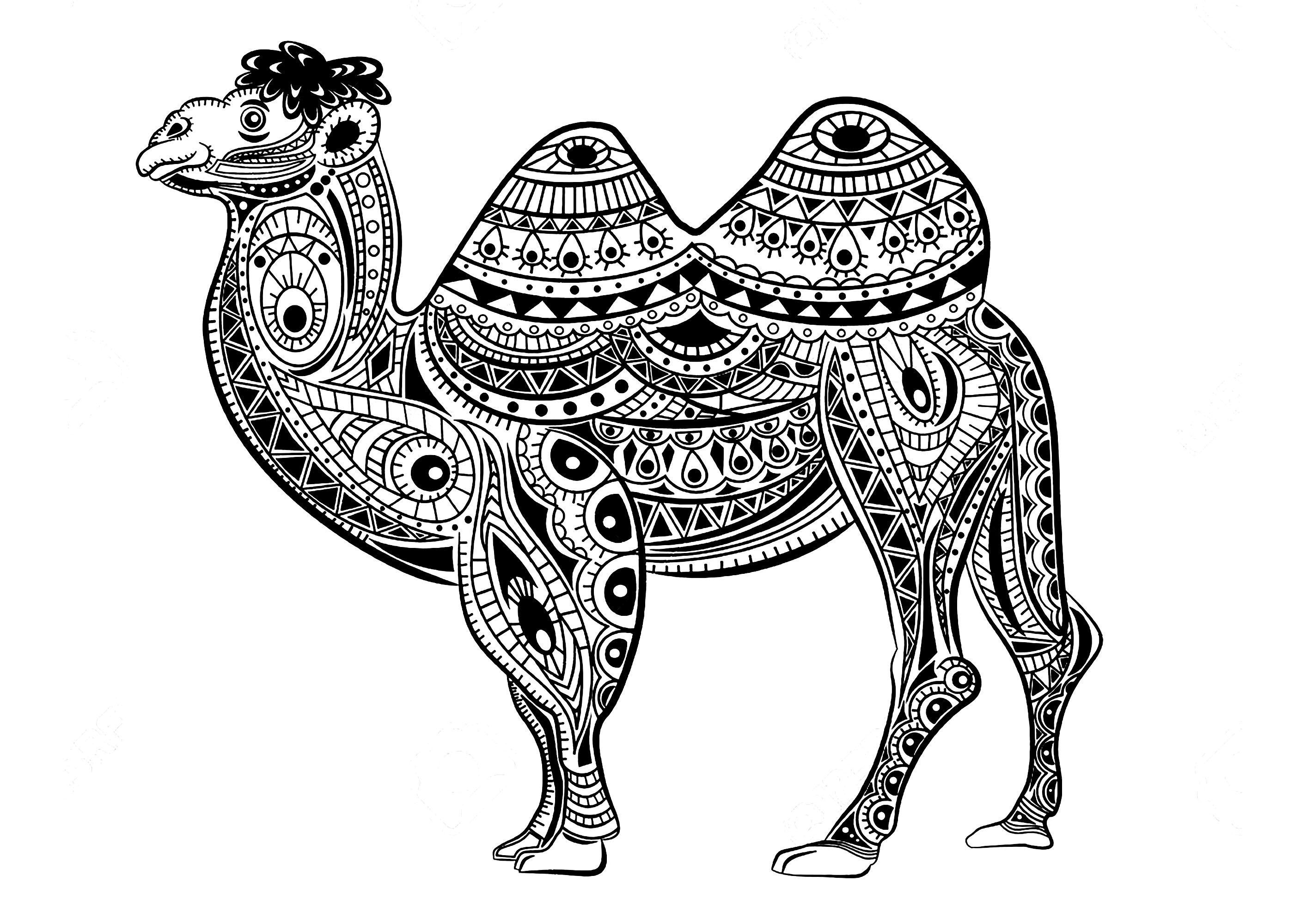 camels coloring pages free printable camel coloring pages for kids coloring pages camels