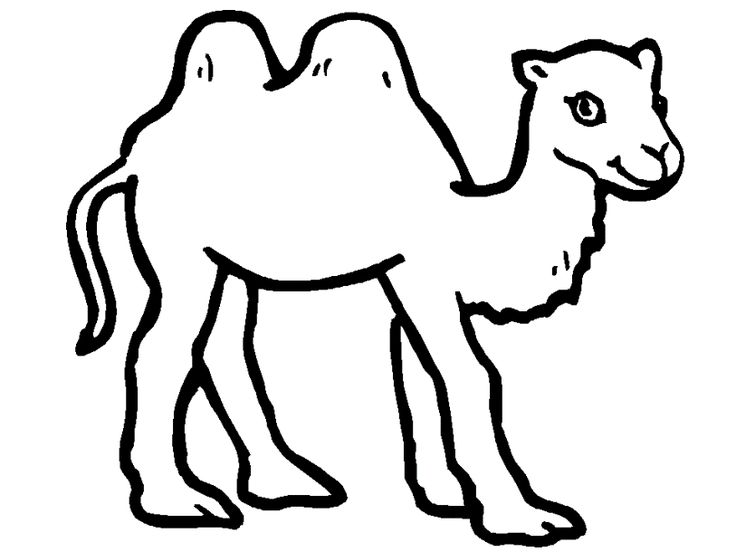 camels coloring pages sally the camel coloring page 5 coloring pages coloring camels pages