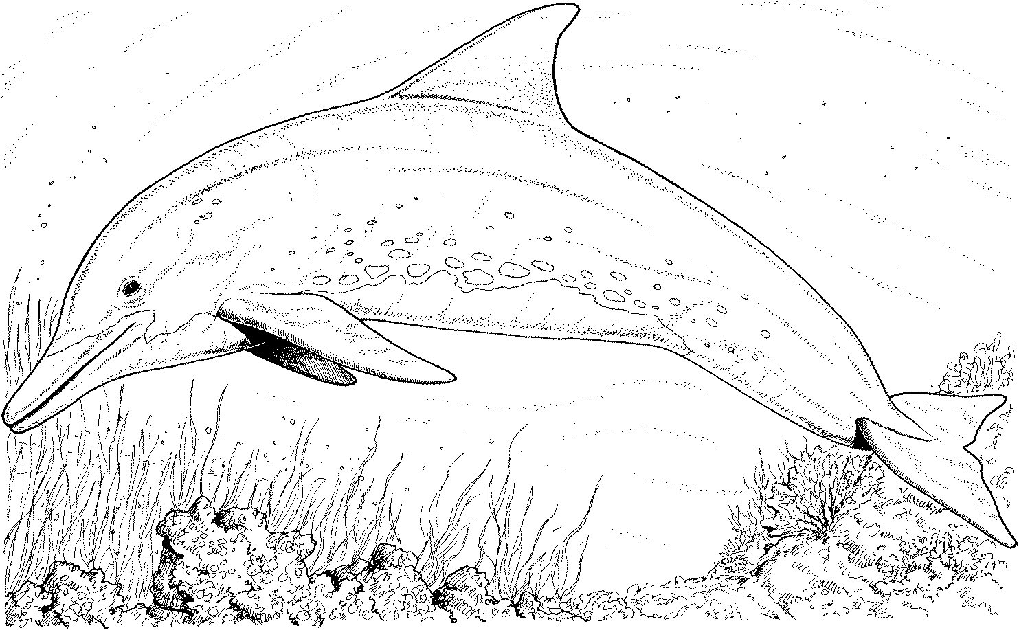 cartoon underwater coloring pages underwater coloring pages to download and print for free cartoon underwater coloring pages