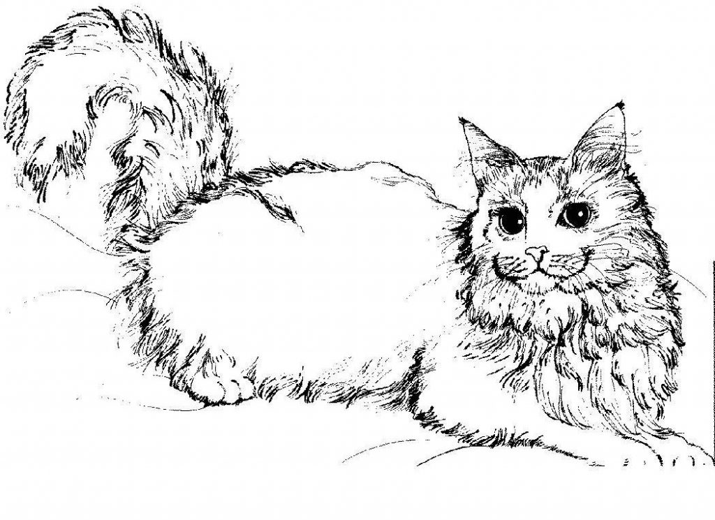 cat printable cute cat with flowers coloring page free printable cat printable