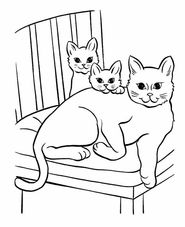 cat printable free cat coloring pages cat printable